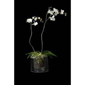 Pot Orchidées