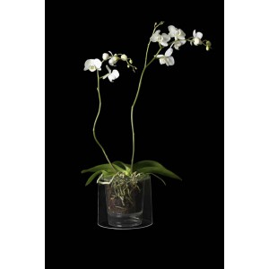 pot orchid es cityplantes growshop en ligne. Black Bedroom Furniture Sets. Home Design Ideas